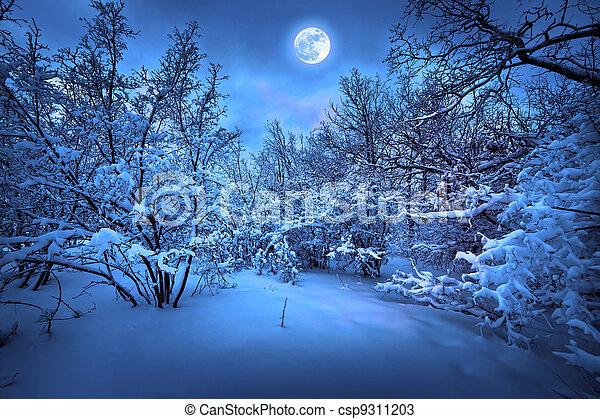 światło księżyca, drewno, zima, noc - csp9311203