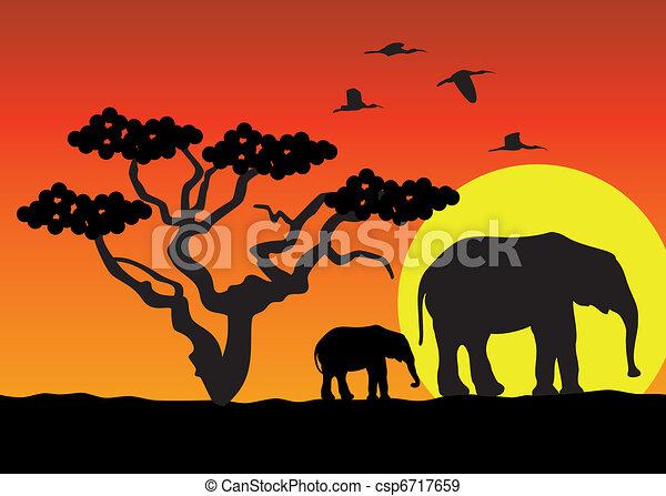 afryka, słonie - csp6717659