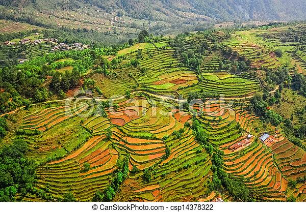 antena, barwny, tarasy, pole, ryż, prospekt - csp14378322
