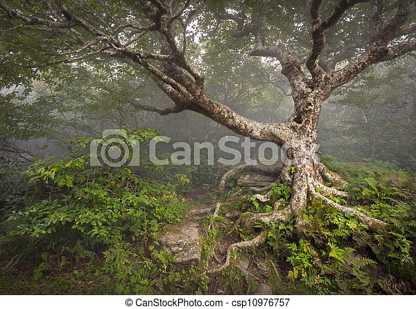 błękitne góry, urwisty, grzbiet, spooky, fairytale, nc, drzewo, pełzający, kaprys, asheville, mgła, las, appalachian, północ, ogrody, krajobraz, carolina - csp10976757