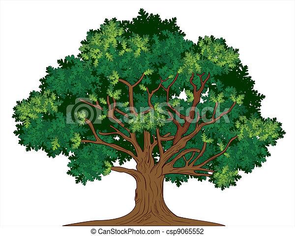 dąb, wektor, drzewo - csp9065552