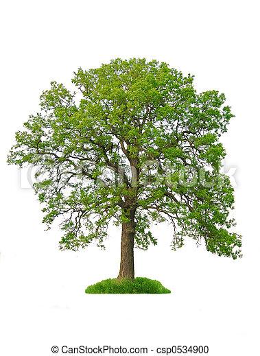 drzewo, odizolowany - csp0534900