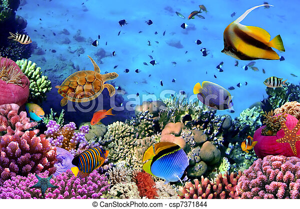egipt, fotografia, koral, kolonia, rafa - csp7371844