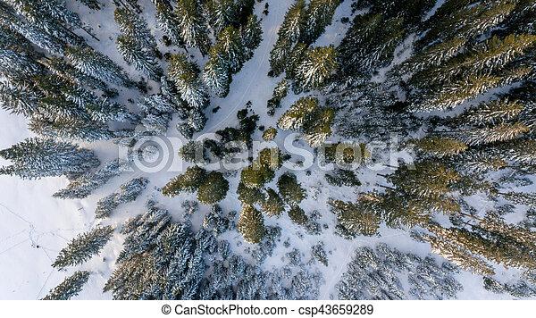 forest., prospekt, zima, antena - csp43659289