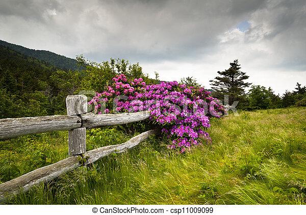 góra, rododendron, kwiat, płot, natura, drewniany, park, otwór, stan, deresz, outdoors, carvers, kwiaty - csp11009099