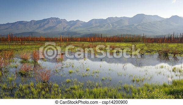 góra, sceniczny, alaska, woda, panoramiczny, outback, bagno, krajobraz - csp14200900