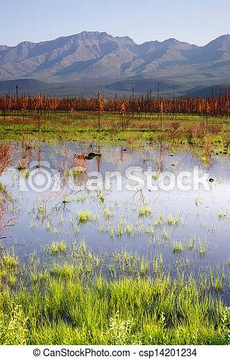 góra, sceniczny, alaska, woda, panoramiczny, outback, bagno, krajobraz - csp14201234