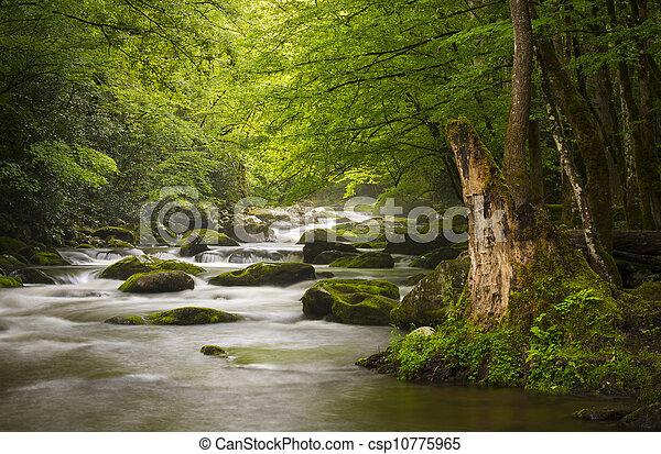 góry, wielki, odprężając, natura, dymny, park, gatlinburg, tn, spokojny, mglisty, tremont, rzeka, krajowy, krajobraz, scenics - csp10775965