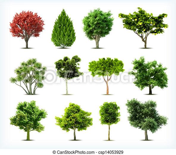 isolated., komplet, drzewa, wektor - csp14053929