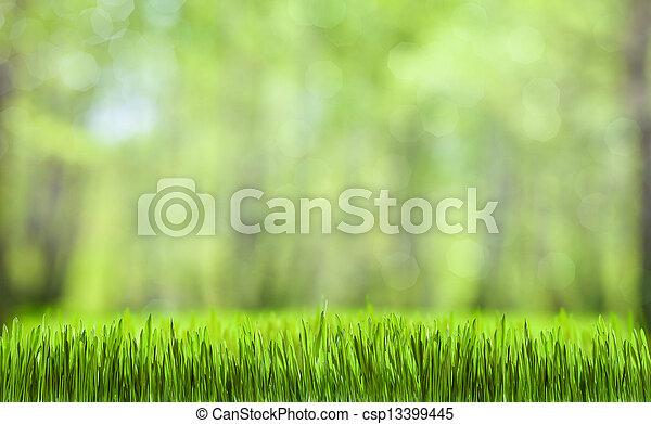 kasownik, wiosna, abstrakcyjny, zielony las, tło - csp13399445