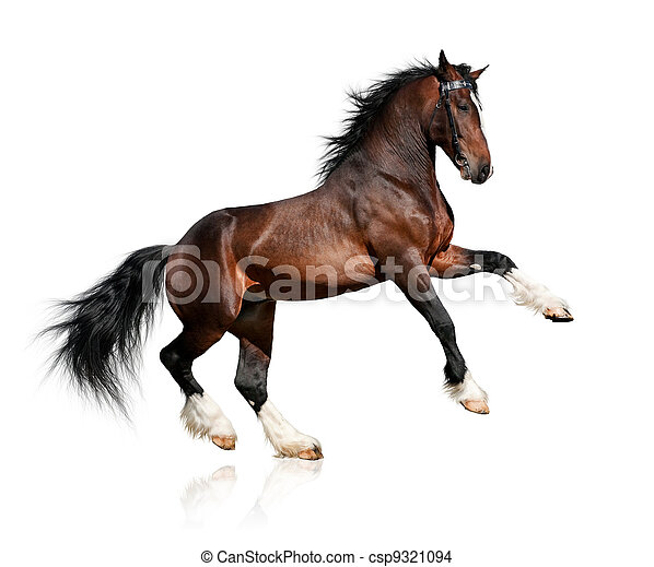 koń, zatoka, biały, odizolowany - csp9321094