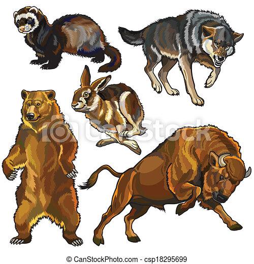 komplet, zwierzęta, europejczyk, dziki - csp18295699
