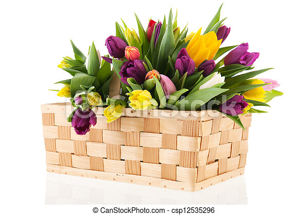 kosz, tulipany - csp12535296