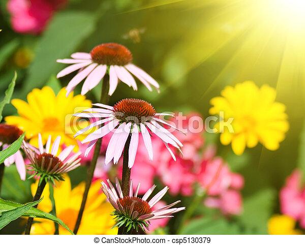 kwiaty, ogród - csp5130379
