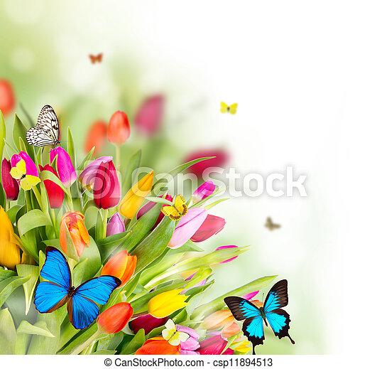 kwiaty, wiosna, motyle, piękny - csp11894513