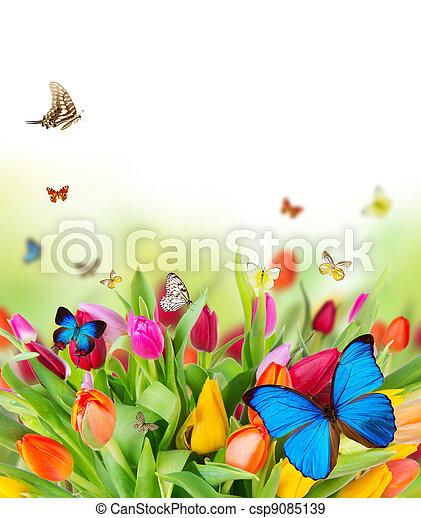 kwiaty, wiosna, motyle, piękny - csp9085139