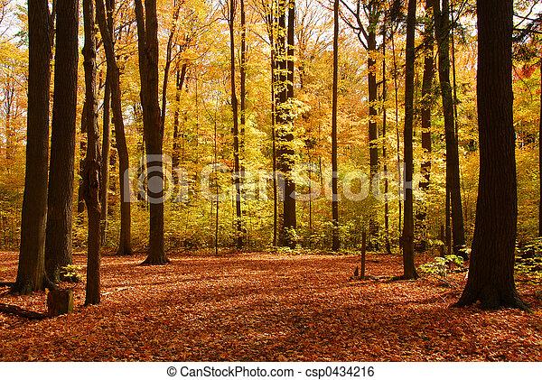 las, krajobraz, upadek - csp0434216