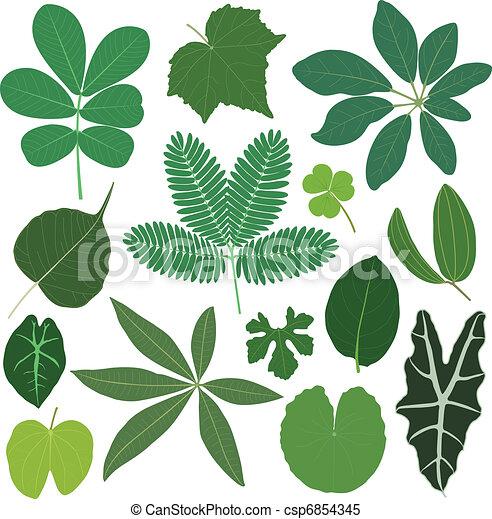liść, liście, roślina, tropikalny - csp6854345