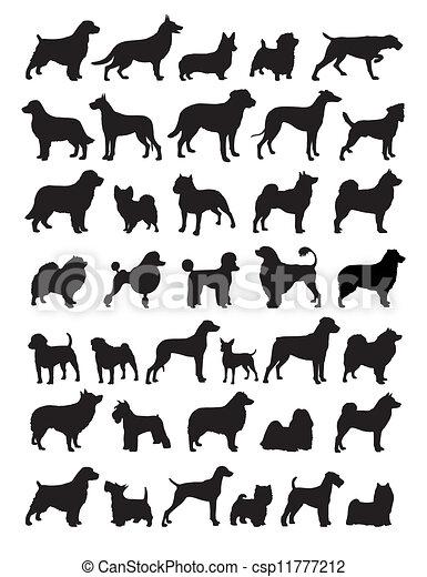ludowy, pies, dziedziczy się - csp11777212