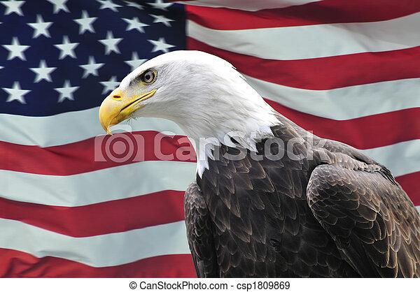 orzeł, usa, boczne drogi, łysy, patrząc, bandera, przód - csp1809869