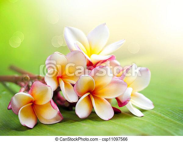 plumeria, tropikalny, flower., zdrój, frangipani - csp11097566