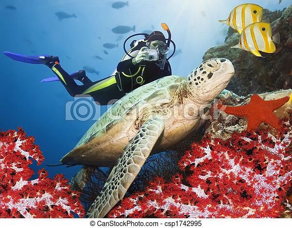 podwodny, żółw, zielony - csp1742995