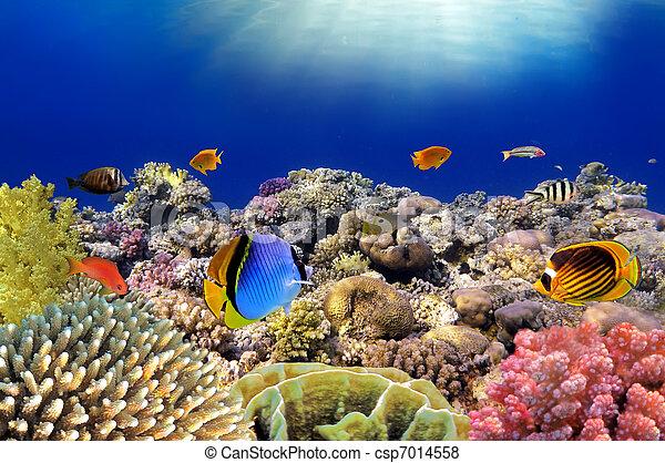 podwodny, egipt, koral, sea., ryby, world., czerwony - csp7014558