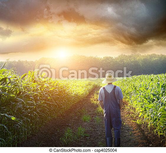 pola, pieszy, zachód słońca, nagniotek, rolnik - csp4025004