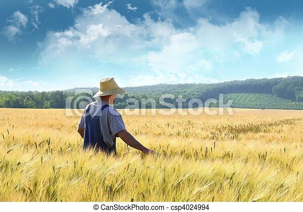 pole, pieszy, pszenica, przez, rolnik - csp4024994