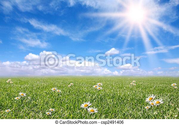 pole, wiosna, słoneczny, jasny, łąka - csp2491406