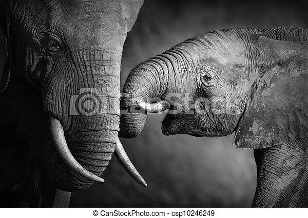 processing), (artistic, przywiązanie, słoń - csp10246249