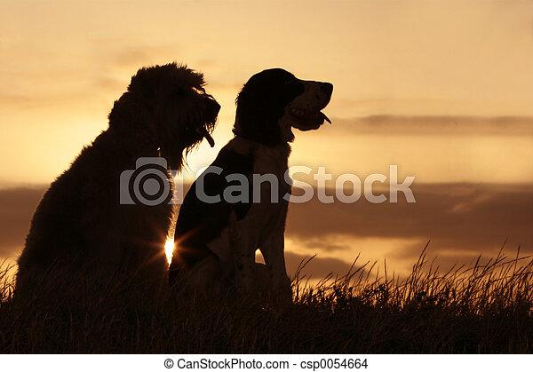 przyjaciele, zachód słońca - csp0054664