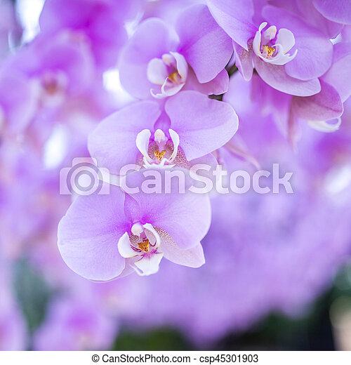 różowa orchidea - csp45301903