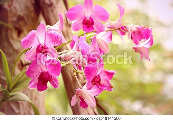 różowa orchidea - csp48144506