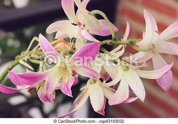 różowa orchidea - csp43193032