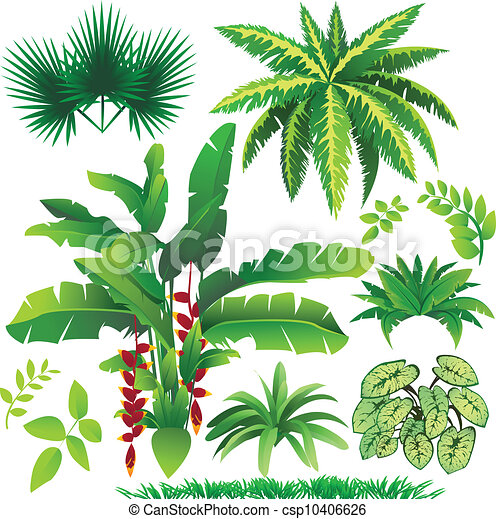 rośliny - csp10406626