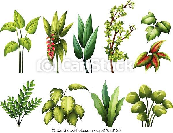 rośliny - csp27633120