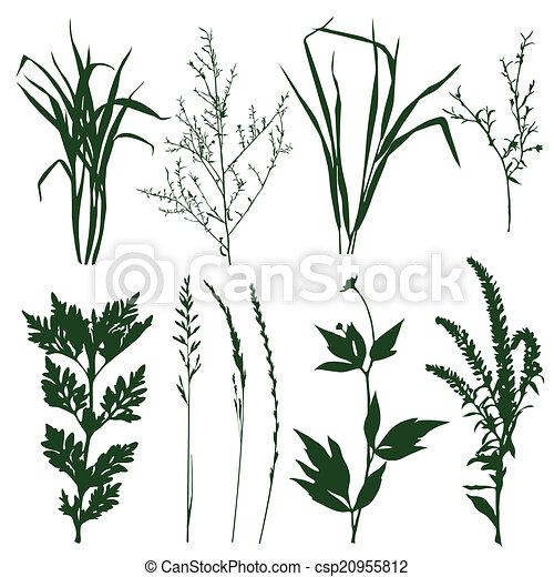rośliny - csp20955812