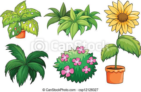 rośliny, wazony - csp12128327