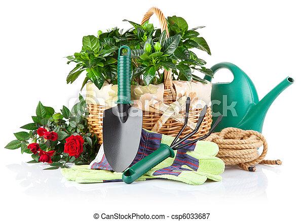 rośliny, wyposażenie, kwiaty, zielony, ogród - csp6033687