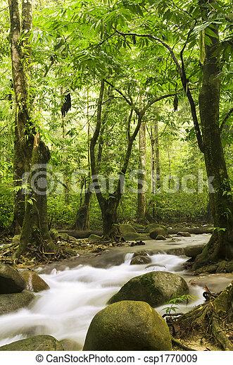 rzeka, las, zielony - csp1770009