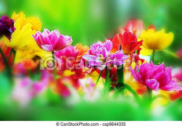 skoczcie kwiecie, ogród, barwny - csp9644335