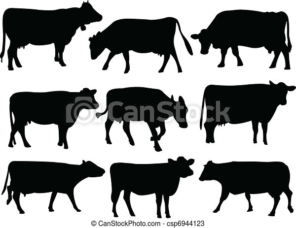 sylwetka, krowa - csp6944123