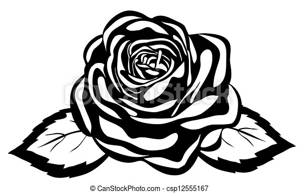 szczelnie-do góry, abstrakcyjny, rose., odizolowany, czarne tło, biały - csp12555167