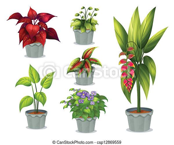sześć, dekoracyjny, rośliny - csp12869559