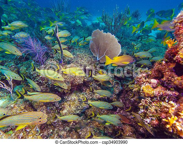 szkoła, żółty, ryby - csp34903990