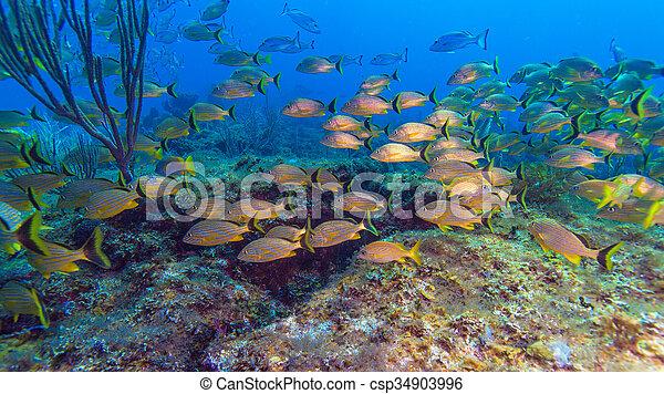 szkoła, żółty, ryby - csp34903996