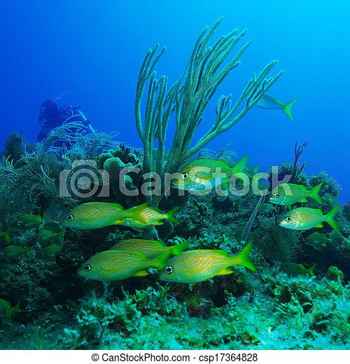 szkoła, żółty, ryby - csp17364828