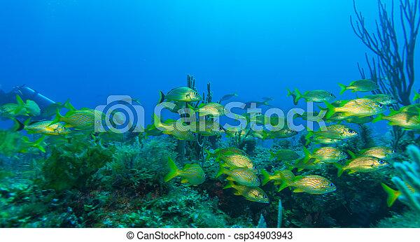 szkoła, żółty, ryby - csp34903943