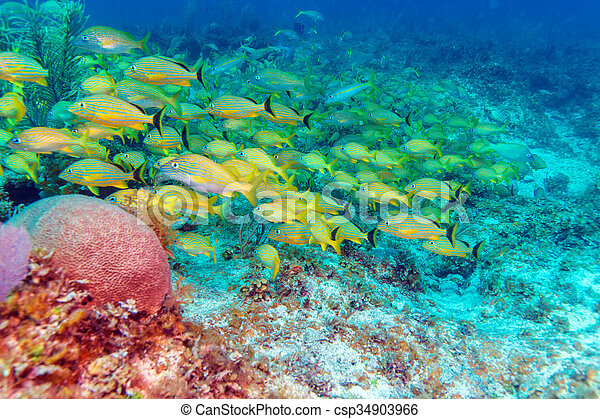 szkoła, żółty, ryby - csp34903966